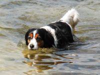 freule loves water