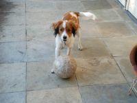 de bal ontdekt